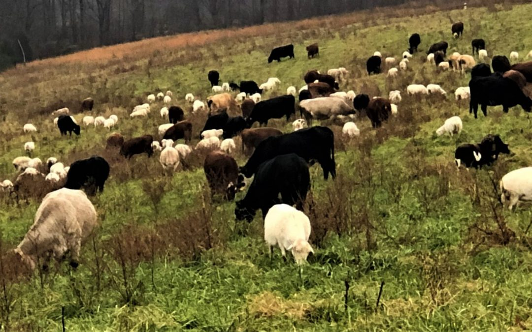 The Evolution of a Multi-Species Grazing Operation