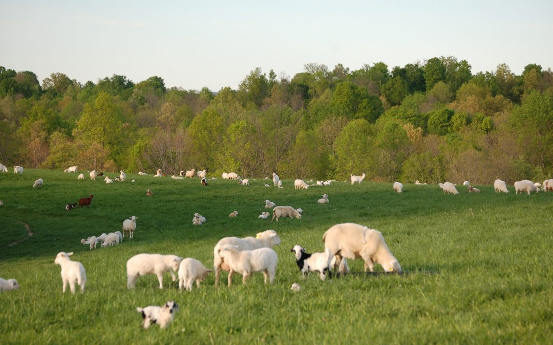 Monthly Grazing and Browse Management for Sheep and Goat