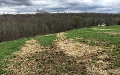 Fertilizing and Nutrient Cycling in Pastures