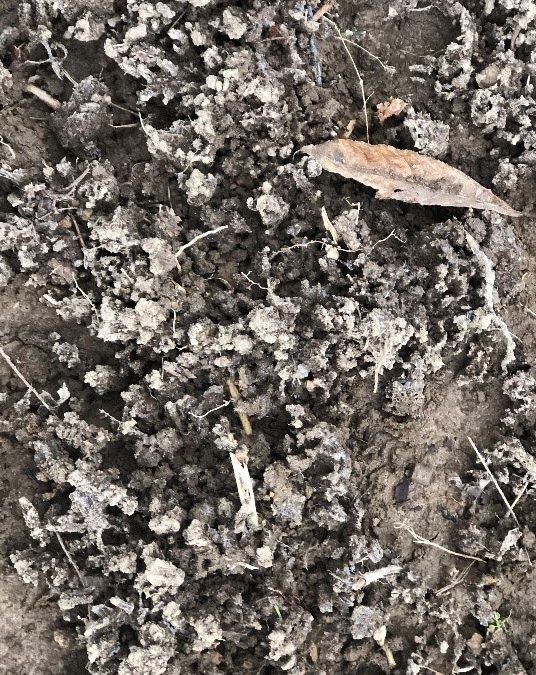 Frost Seeding Legumes